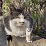 モデルのキジトラ白猫さんと木彫り猫の写真を撮りました