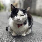 花粉症の黒白猫さん