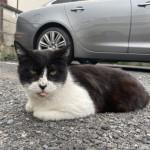 駐車場の猫さんたち