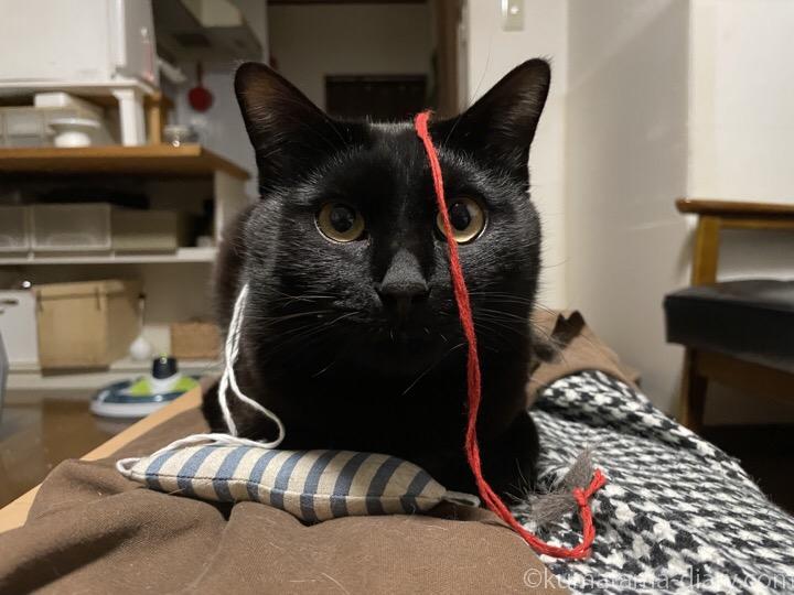 毛糸をつけたふみお