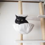 繊細な猫には不向きなキャットタワーの場所