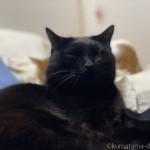 ベッドで先に寝る猫たち