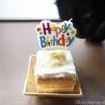 猫の誕生日を「かぼちゃと豆乳のショートケーキ」でお祝いしました
