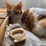 ブラッシング嫌いの猫に毎日「ピロコーム やわらかめ」でブラッシングしています