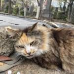 石にスリスリしていた三毛猫さん
