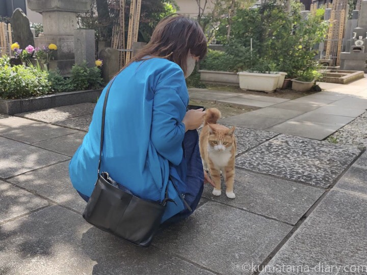 茶トラ白猫さんと私