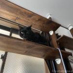 キャットウォークからハンモックに入る猫を下から撮りました