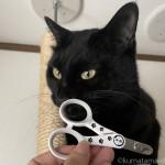 猫壱の「ストレスなくスパッと切れる猫用爪切り 日本製」をプレゼント