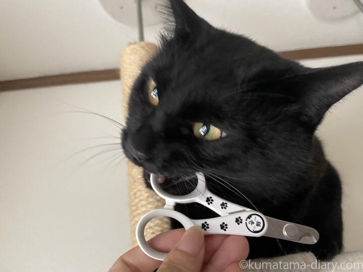 爪切りを噛むふみお