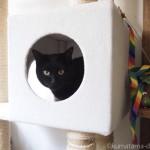 猫の誕生日に「ギャザー キャット フリーエーカー」をプレゼント