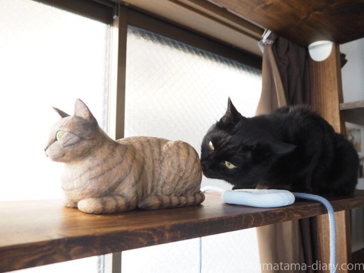 香箱座りのキジトラ猫さんとふみお