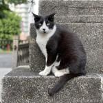 初めて見かけた黒白猫さん