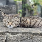 四角い穴にすっぽり入っていたキジトラ猫さん