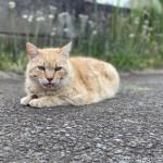 毛色がキレイでかっこいい茶トラ猫さんに話しかけました