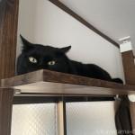【月命日】穏やかで優しい性格の黒猫