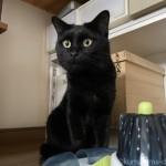 アニマルコミュニケーションを受けて猫の気持ちがわかりました