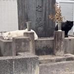 仲良しの白猫さんと黒猫さん