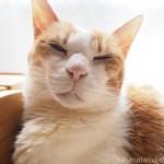 猫の誕生日にローラー鍼をプレゼント