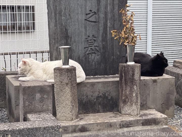 白猫さんと黒猫さん黒猫さんc
