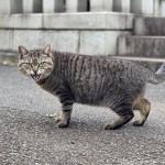 お腹が空いていたキジトラ猫さん