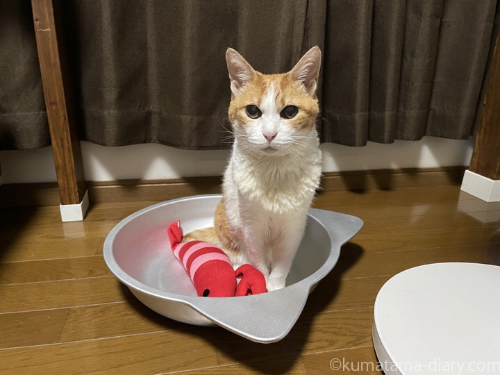 猫鍋たまき