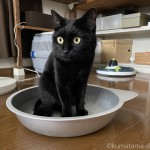 「マルカン ひんやりクール猫鍋」を前足で引っかく猫
