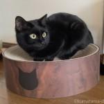交換できる爪とぎ「猫壱 バリバリボウル 猫柄 ダークブラウン」を買いました