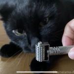 ローラー鍼を猫に使っています