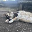 長毛の三毛猫さん