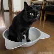 猫鍋に入るふみお