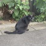 【月命日】オスの黒猫さんのかっこよさ