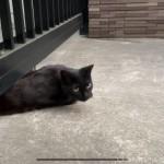 門をくぐる黒猫さん