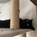 キャットタワーの柱を足で挟んで眠る猫