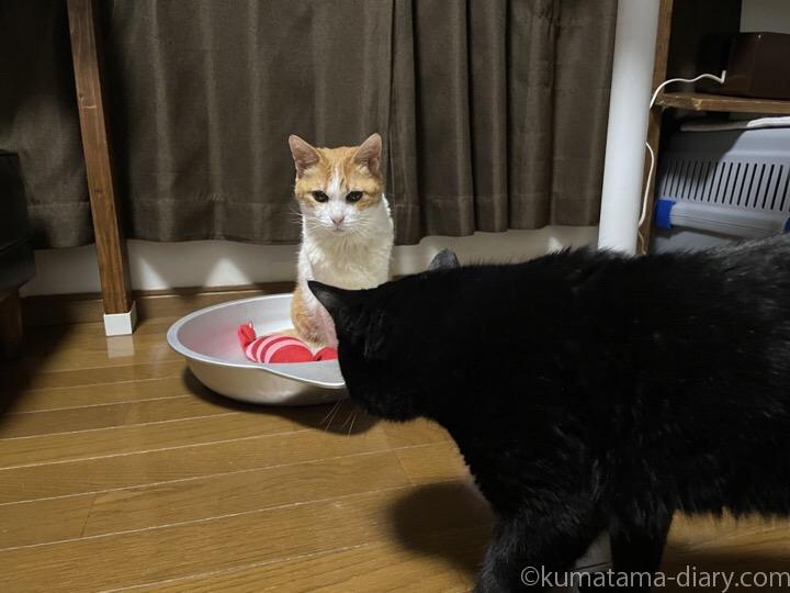 猫鍋たまきとふみお