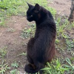 かぎしっぽがステキな黒猫さん