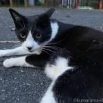 目の前で寝転がる黒白猫さん