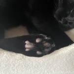 キャットタワーのボックスに足を乗せて寝る猫