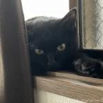窓台で寝そべる猫