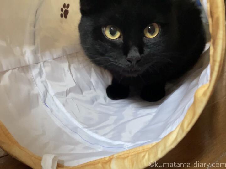 猫壱キャットトンネル