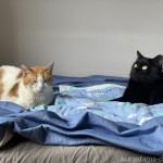 ベッドの上でまったりする2匹