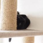 【月命日】暑がりなオスの黒猫
