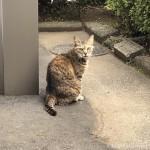 顔まわりがスッキリしたキジトラ猫さん
