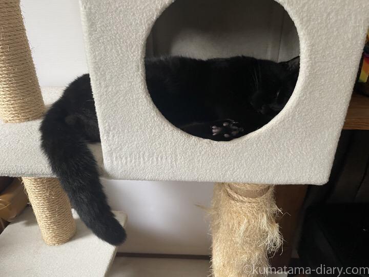 キャットタワーボックスふみお