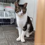 庭付き・エアコン完備の専用ハウスに住む猫さん