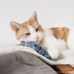 鯖のけりぐるみを枕にして眠る猫