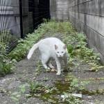 近づいてきてくれた白猫さん