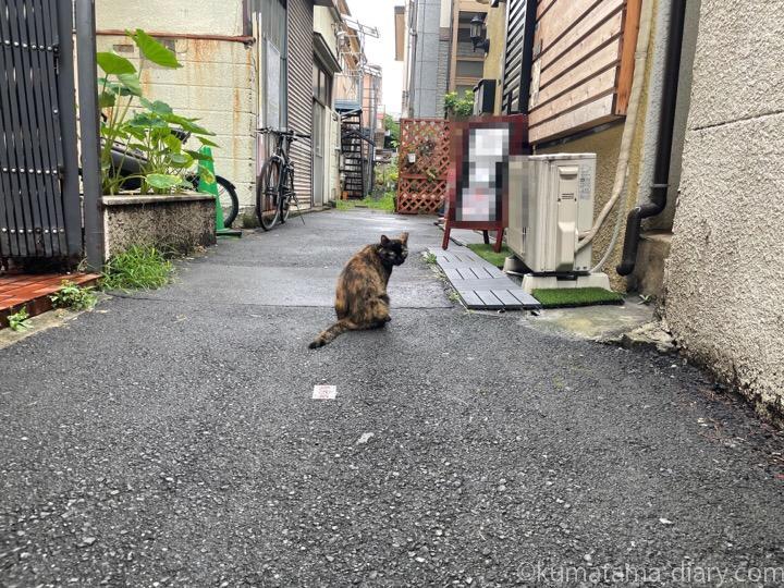 サビ猫さん発見