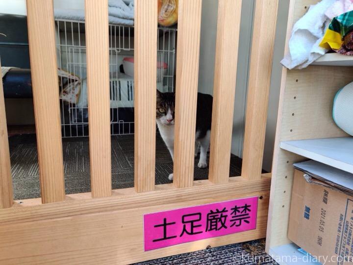 猫専用ハウスの猫さん