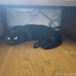 テレビ台の下で寝る猫