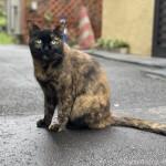 「世界猫の日」に見かけたサビ猫さん